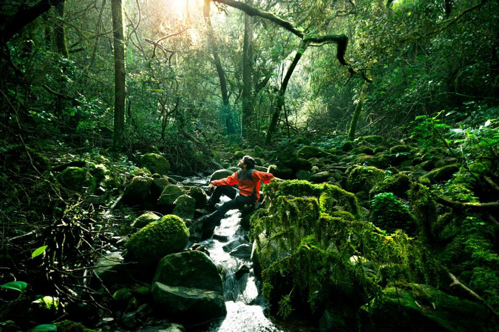 Tips for Shooting in the Rainforest